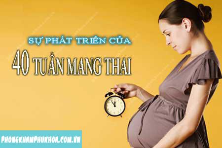 Quá trình, sự phát triển của thai nhi theo từng tuần tuổi